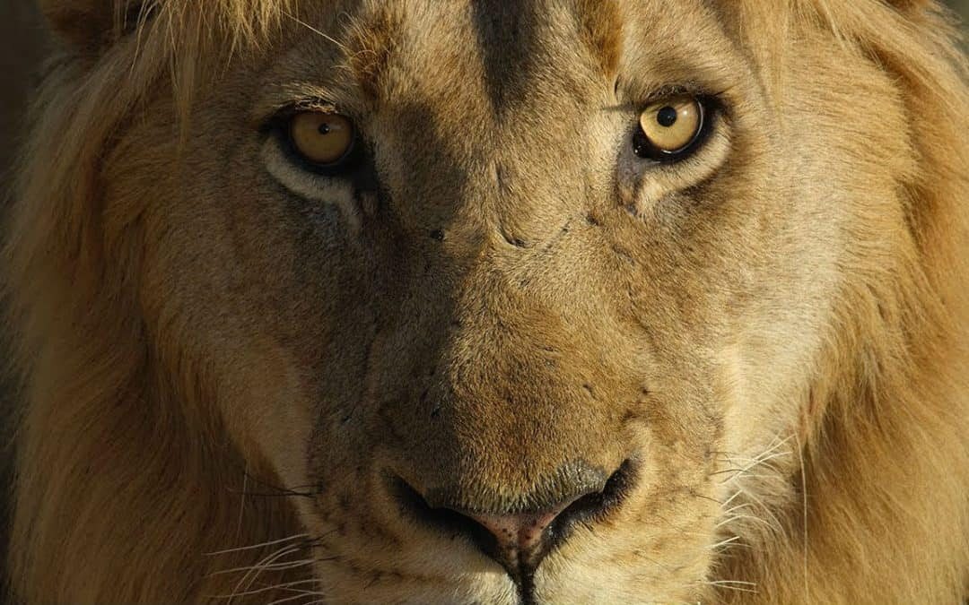 Let's look at Lions