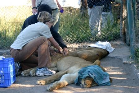 Veterinary & Health for Lions