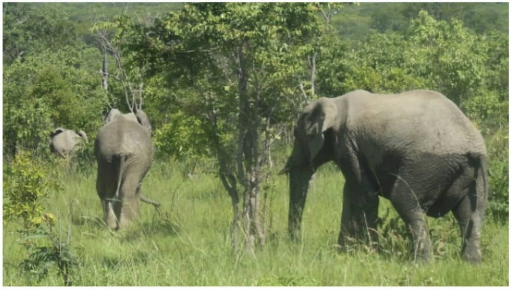 Elephants in Chizarira National Park