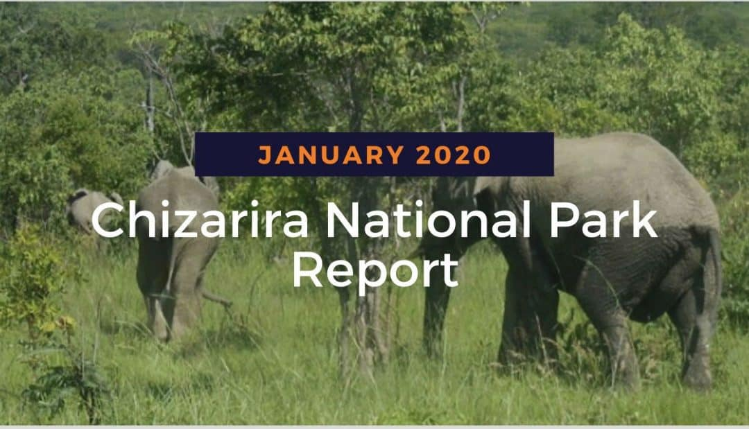 Chizarira Report: January 2020